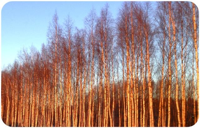 puut2